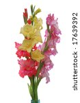 three colorful gladioluses... | Shutterstock . vector #17639392