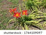 3 Bright Red And Yellow Flowers ...