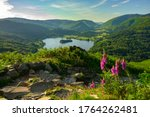 Foxgloves And Grasmere From...