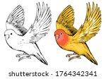 Drawing Of Cute Flying Lovebird....