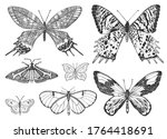 Butterfly Or Wild Moths Insects....