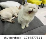Happy Cats And Dog  Samson And...