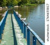 Seagulls Sitting On The...
