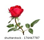 single beautiful red rose... | Shutterstock . vector #176467787