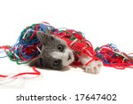 Stock photo kitten playing with yarn 17647402