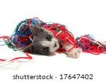 Stock photo kitten playing with yarn 17647402