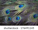 background of colorful peacock