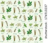 fresh herbs background vector | Shutterstock .eps vector #176513237