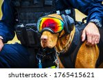 A Police Army Dog With Goggle...