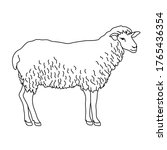 sheep line drawing.... | Shutterstock .eps vector #1765436354