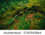 Beautiful Taiga Background With ...