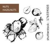 nuts. hazelnuts. set of hand... | Shutterstock .eps vector #176559005