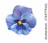 The Blue Garden Bicolor Pansy...