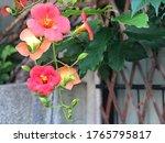Colorful Blossom Summer Season...