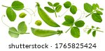 Fresh Green Pea Leaves Isolated ...