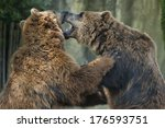 Two Brown Grizzly Bears While...
