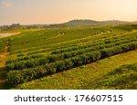 tea plantations  | Shutterstock . vector #176607515