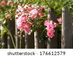 Stock photo rose 176612579
