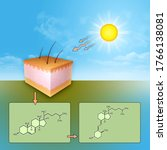 The Synthesis Of Vitamin D...