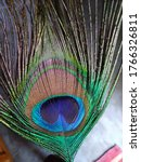Peacock's Feather.this Feathers ...