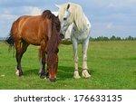 horses on a summer pasture | Shutterstock . vector #176633135