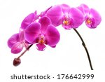 orchid | Shutterstock . vector #176642999
