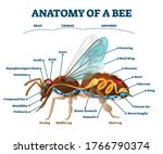 Anatomy Of Bee With Inner...