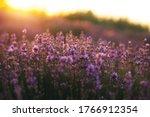 beautiful purple lavender...   Shutterstock . vector #1766912354