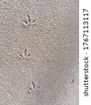 Birds Footprints On Sand...