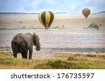 African Elephant    Foggy...