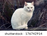 Stock photo white cat 176742914