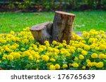 Marigold Around  Tree Stump
