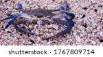 Fresh Blue Swimming Crab Or...