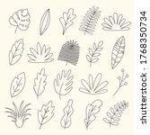 set of linear leaves  herbs ...   Shutterstock .eps vector #1768350734