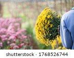 Bouquet Of Yellow Chrysanthemum ...