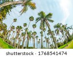 Palm Tree In Aoshima  Miyazaki...