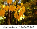 Autumn Background.sun Ray Fall...
