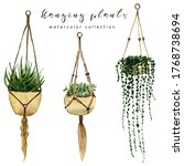 Hanging Potted Succulent...