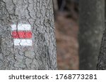 Red Tourist Trail Mark On Tree