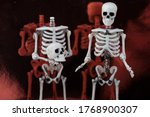 Two Human Toy Skeletons Stand...
