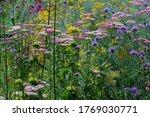 Garden With Perennials Flowers...