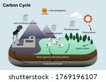 Diagram Of Carbon Cycle ...
