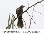 One Hawk Perched On A Branch O...