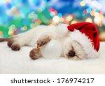 Little Kitten Wearing Santa Hat ...