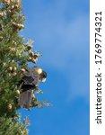 Yellow Tailed Black Cockatoo ...