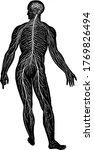 network of human nervous system ...   Shutterstock .eps vector #1769826494