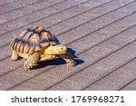 Turtle Is Walking On The Stree...