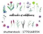 Wild flowers background...