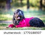 Black Furry Dog Dress In Pirate ...
