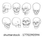 skulls. human anatomy bones...